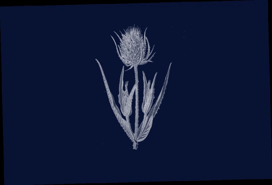 flower_Navy.psd